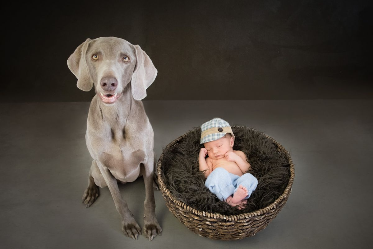 baby-hund-fotografie-wien