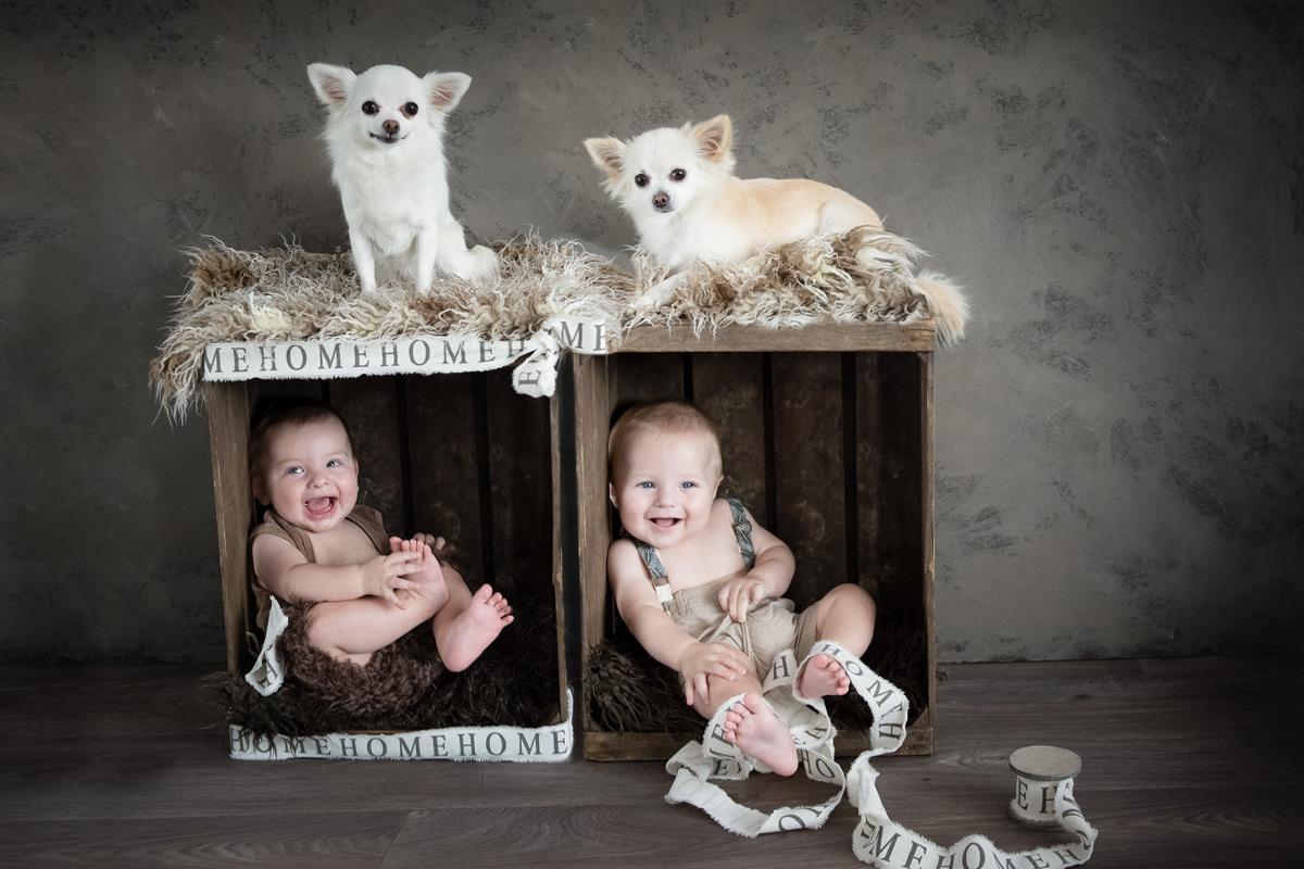 hundefotografie-baby-momentegrafie
