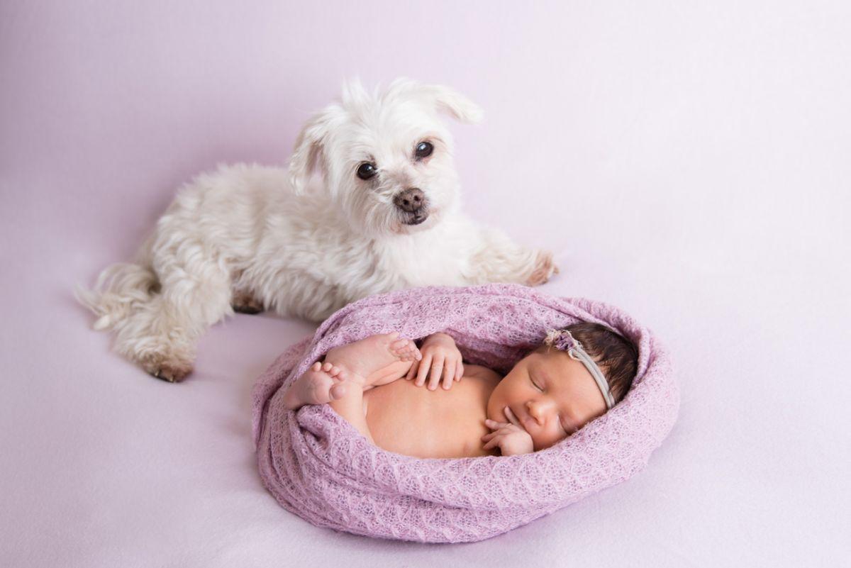 newborn-malteser-momentegrafie